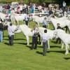 Connemara Pony Festival