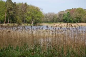 Emo Court Lake