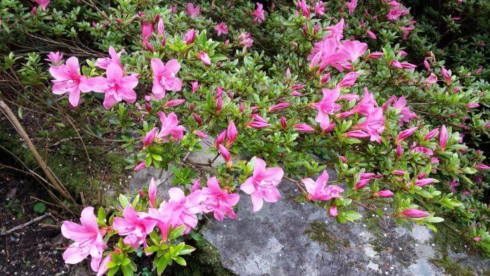 Garinish Island -flowers