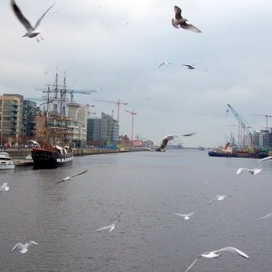 Gulls on the Liffey, by diluvi