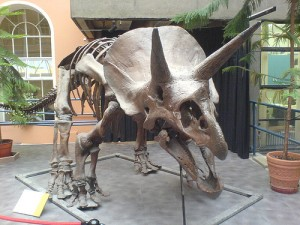 Triceratops, by Stuhacking