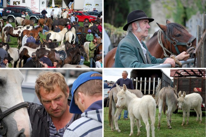 Horse Fair at Puck Fair